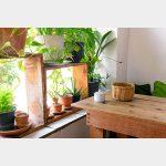 Você pode ter um mini jardim em casa: é fácil e traz benefícios